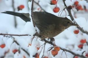 Bir ağaç dalına tünemiş kuş (Derin öğrenme kullanılarak üretilmiştir.)